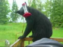 bear feeder