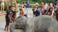 they loved getting a mud bath!